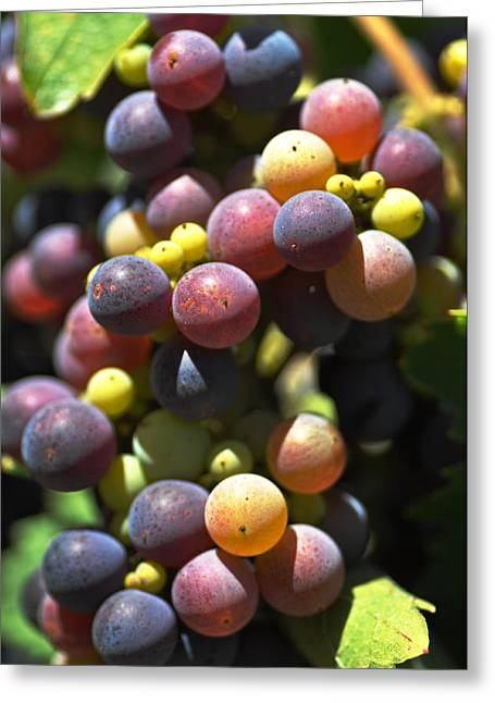 Grape Vineyards Greeting Cards - Grape Vine Greeting Card by Kelly Wade