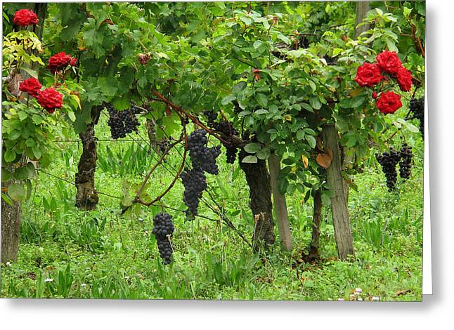 Wine Scene Greeting Cards - Grape Vines and Roses I Greeting Card by Greg Matchick
