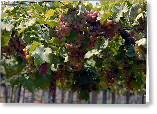 Grape Pyrography Greeting Cards - Grapes 1 Greeting Card by Johnson Moya
