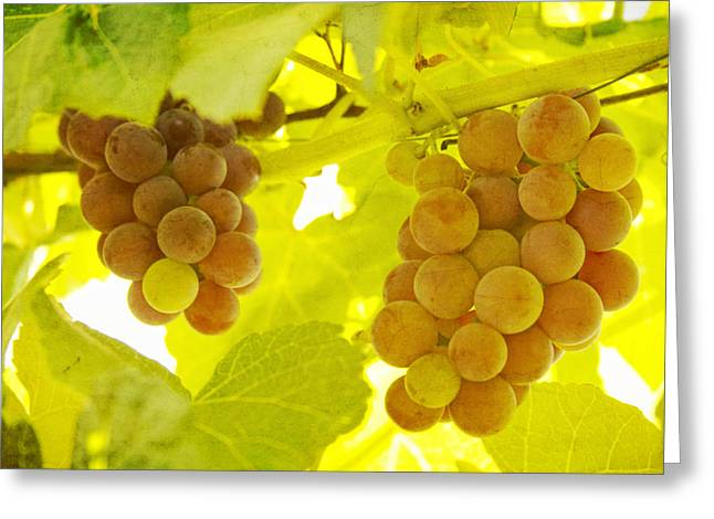 Grape Vines Greeting Cards - Grapes A fine Art Photography Print and Canvas Art Greeting Card by James BO  Insogna
