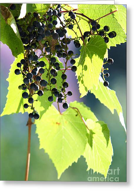 Grapes And Leaves Greeting Card by Michal Boubin