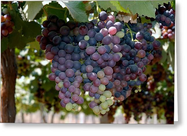 Grapes Bunch Greeting Card by Johnson Moya