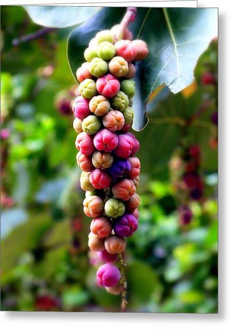 Wine Reflection Art Photographs Greeting Cards - Grapes By the Sea Greeting Card by Karen Wiles