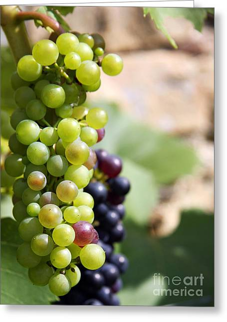 Organic Greeting Cards - Grapes Greeting Card by Jane Rix