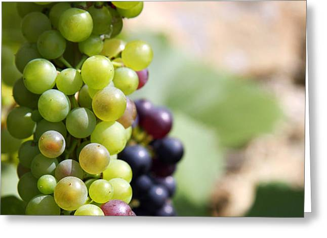 Grapes Greeting Card by Jane Rix