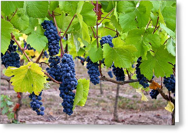 Pinot Noir Greeting Cards - Grapes Greeting Card by Jean Noren