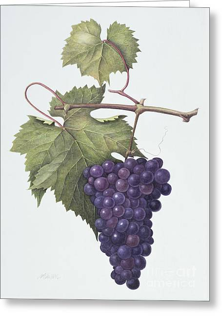 Grapes  Greeting Card by Margaret Ann Eden
