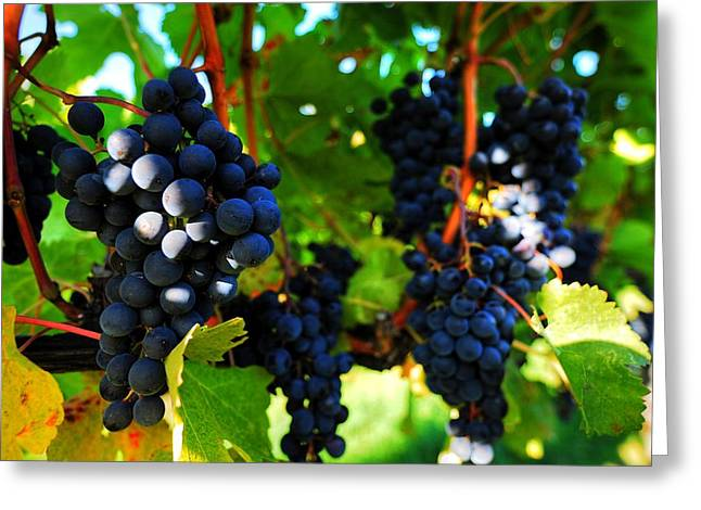 Wesley Allen Photography Greeting Cards - Grapes of Merlot Greeting Card by Wesley Allen Shaw