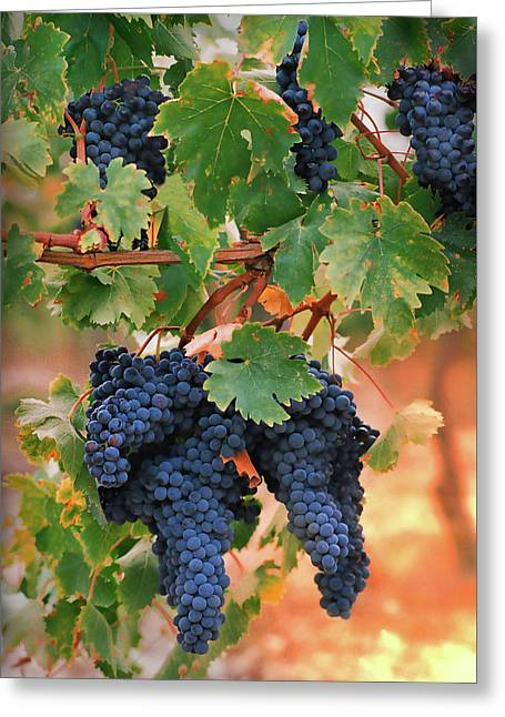 Chianti Greeting Cards - Grapes of Tuscany Greeting Card by Dallas Clites