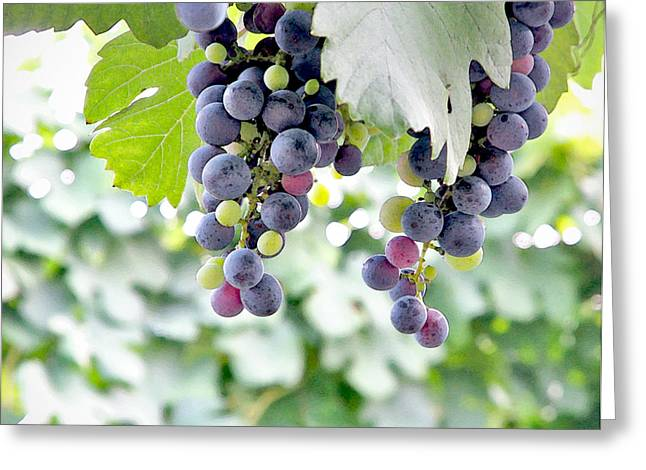 Grape Vines Greeting Cards - Grapes on the Vine Greeting Card by Glennis Siverson