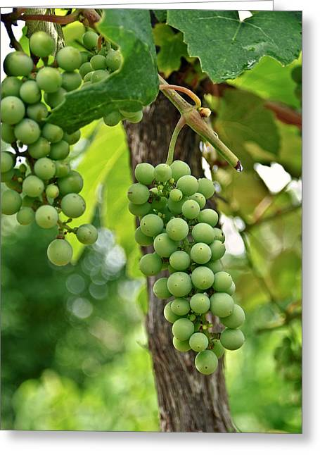 Susan Leggett Greeting Cards - Grapes on the Vine Greeting Card by Susan Leggett