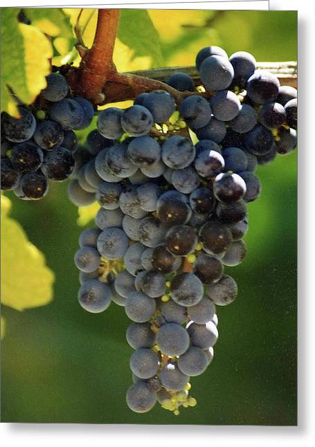 Bunch Of Grapes Greeting Cards - Grapes on the Vine Greeting Card by Wanda Jesfield