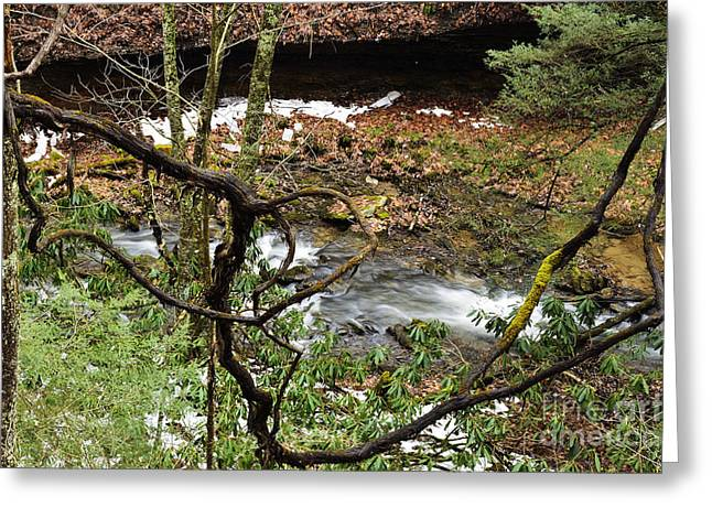 Grapevines Greeting Cards - Grapevine Birch River Greeting Card by Thomas R Fletcher