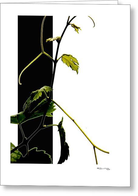 Xoanxo Digital Art Greeting Cards - Grapevine collage Greeting Card by Xoanxo Cespon