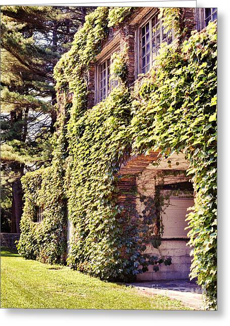 Arched Windows Greeting Cards - Grapevine Covered Building Greeting Card by HD Connelly
