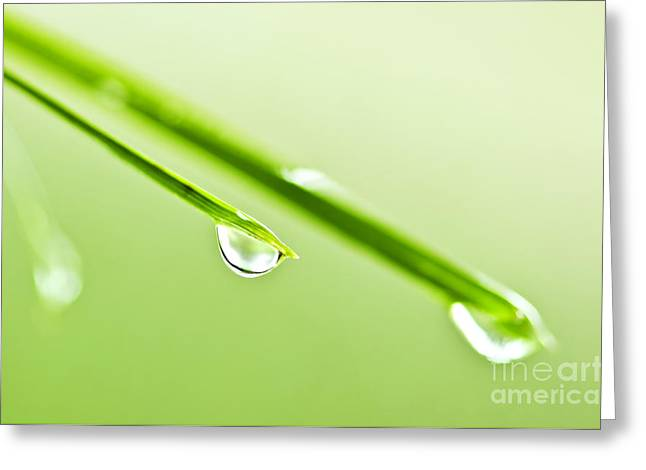 Dewdrop Greeting Cards - Grass blades with water drops Greeting Card by Elena Elisseeva