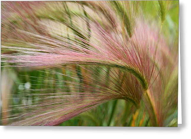 Abstract Nature Greeting Cards - Grass in the Field of Dreams Greeting Card by Michele Cornelius