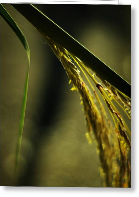 Light Taupe Greeting Cards - Grass Plume Greeting Card by Rebecca Sherman