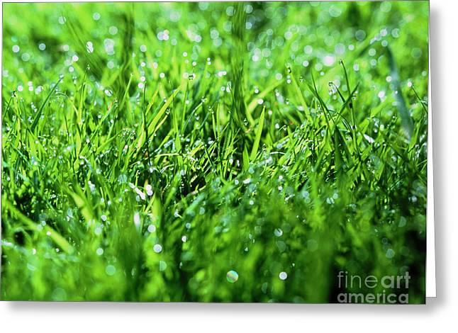 Dewdrops Greeting Cards - Grass Greeting Card by Sinclair Stammers