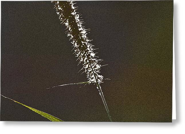 Grass Spikelet Greeting Card by Heiko Koehrer-Wagner