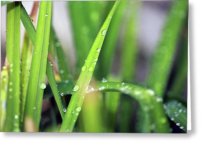 Family Time Greeting Cards - Grass With Rain Drops  Greeting Card by Michael Ledray
