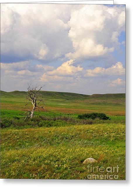 Saskatchewan Photographs Greeting Cards - Grasslands National Park Greeting Card by Charline Xia
