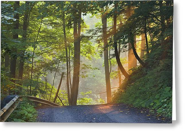 Mid Summer Morning Greeting Cards - Gravel Road At Sunrise, Pelham, Ontario Greeting Card by Darwin Wiggett