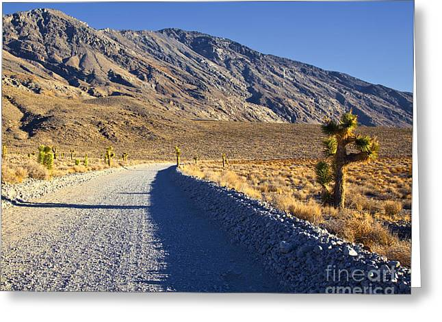 Gravel Road Greeting Cards - Gravel Road in Desert Greeting Card by David Buffington