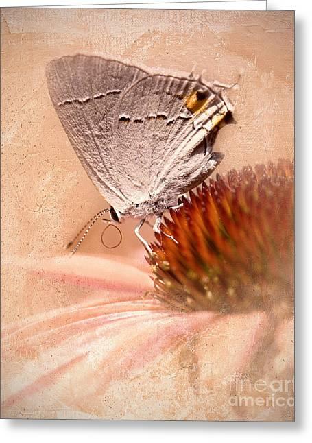 Gray Hairstreak Butterfly Greeting Card by Betty LaRue