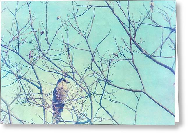 Gray Bird Greeting Cards - Gray Jay In A Tree Greeting Card by Priska Wettstein