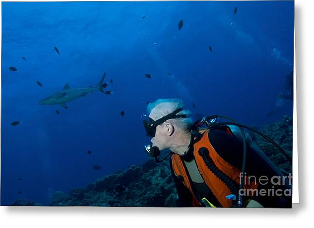 Reef Fish Greeting Cards - Gray Reef Shark With Diver, Papua New Greeting Card by Steve Jones