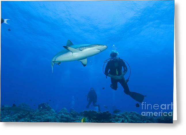 Reef Fish Greeting Cards - Gray Reef Shark With Divers, Papua New Greeting Card by Steve Jones
