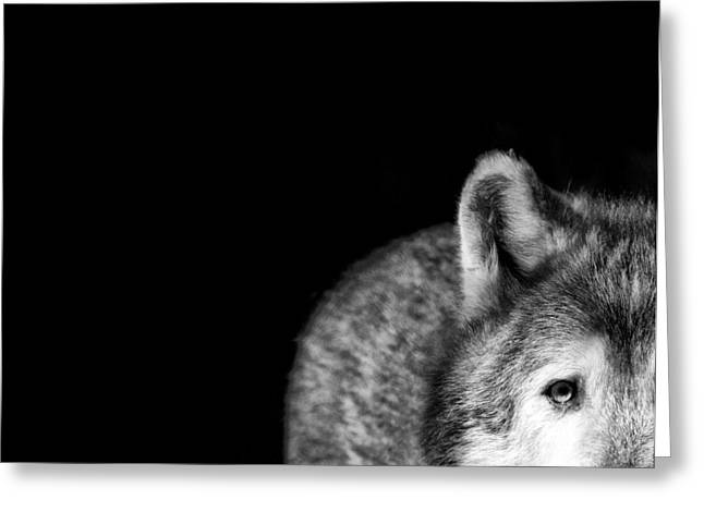 Black. Timber Wolf Photography Greeting Cards - Gray Wolf Stare Photo Ive Got My Eye on You Greeting Card by Stephanie McDowell