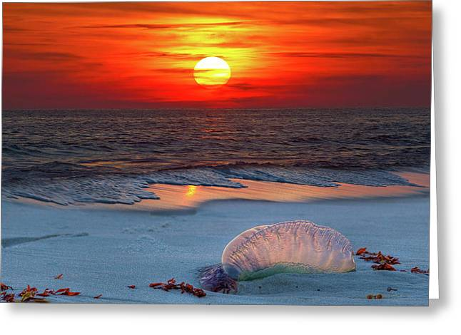 Grayton Beach Sunset III Greeting Card by Charles Warren
