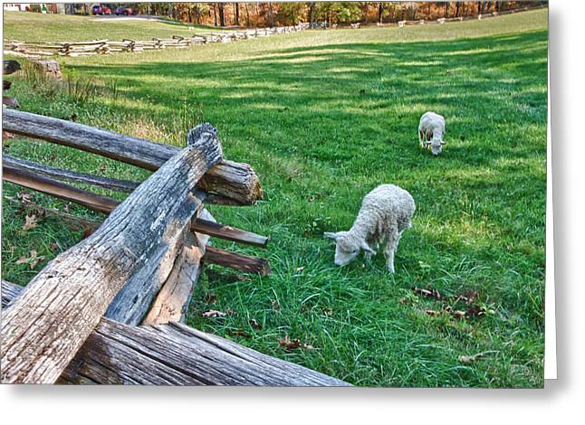 Booker T. Washington Greeting Cards - Grazing Farm Animals at Booker T. Washington National Monument Park Greeting Card by James Woody