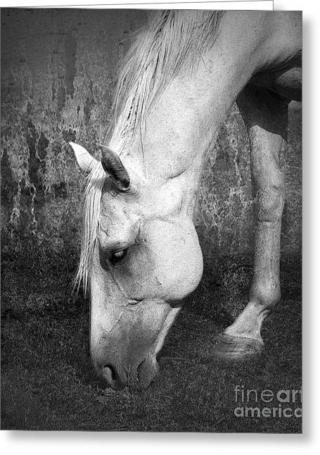 Quarter Horse Digital Art Greeting Cards - Grazing in Black and White Greeting Card by Betty LaRue