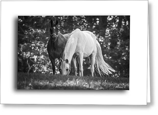 Grazing In Black And White Greeting Card by Brian Wallace