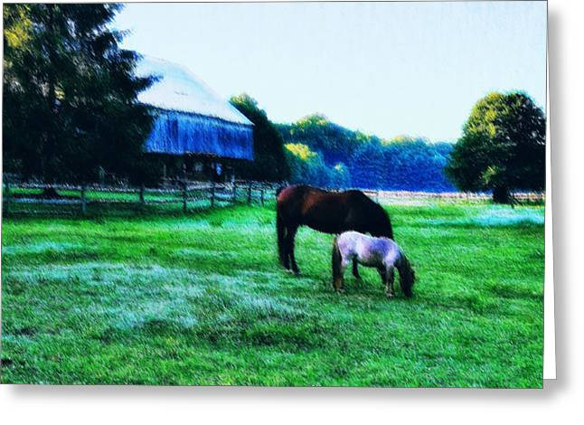 Grazing in the Meadow Greeting Card by Bill Cannon