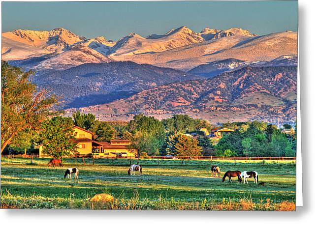 Grazing Snow Greeting Cards - Grazing Greeting Card by Scott Mahon