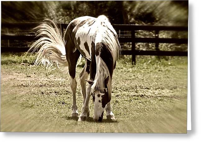 Susan Leggett Greeting Cards - Grazing Stallion Greeting Card by Susan Leggett