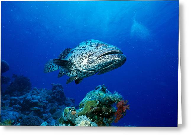 Reef Photos Greeting Cards - Great Barrier Reef Greeting Card by Peter Stone - Printscapes