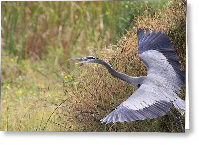 Travis Truelove Photography Greeting Cards - Great Blue Heron - Blue Angel Greeting Card by Travis Truelove