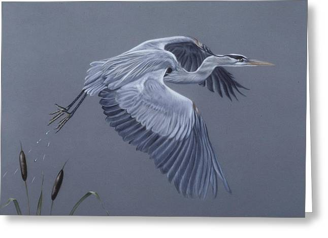 Country Cottage Pastels Greeting Cards - Great Blue Heron in Flight Greeting Card by Patricia Ivy