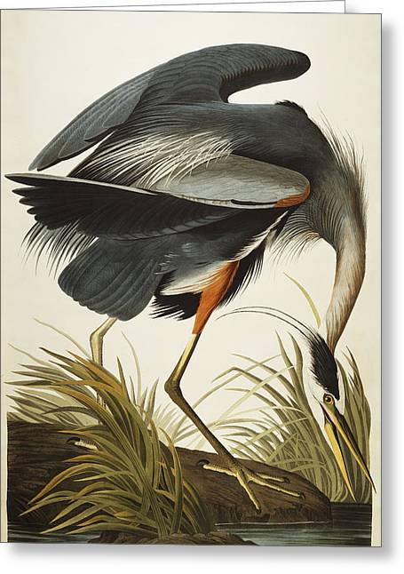 Blue Bird Greeting Cards - Great Blue Heron Greeting Card by John James Audubon