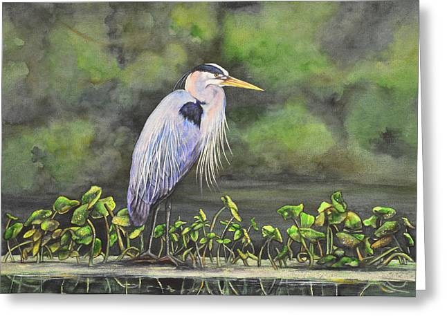 Low Country Watercolor Greeting Cards - Great Blue Heron on Lily Pad Greeting Card by Laurie Tietjen