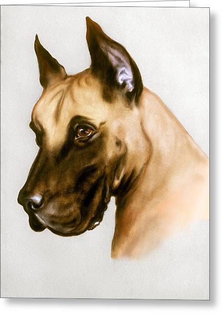 Great Dane Pastels Greeting Cards - Great Dane Greeting Card by Patricia Ivy