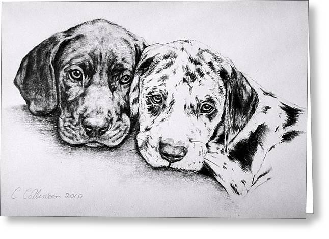 Harlequin Great Dane Puppies Greeting Cards - Great Dane Puppies Greeting Card by Caroline Collinson