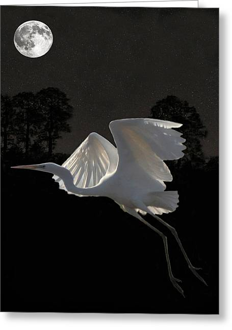 Acroplolis Greeting Cards - Great Egret In Flight Greeting Card by Eric Kempson