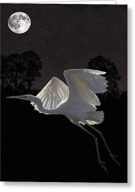 Ellenisworkshop Greeting Cards - Great Egret In Flight Greeting Card by Eric Kempson