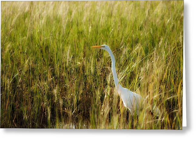 Ardea Greeting Cards - Great Egret in the Morning Dew Greeting Card by Rich Leighton